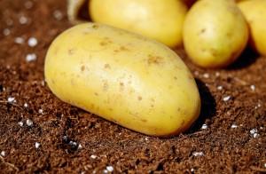 potatoes-1585057_1280